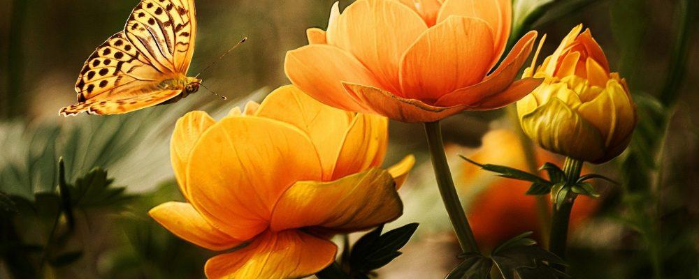 flowers-1POENY